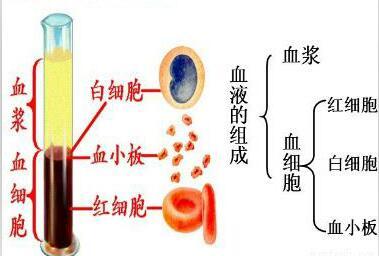想要成分血&全血捐献切换自如,这套献血间隔请收好!