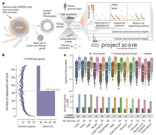 《自然》双重磅:猎杀癌细胞基因名单发布!