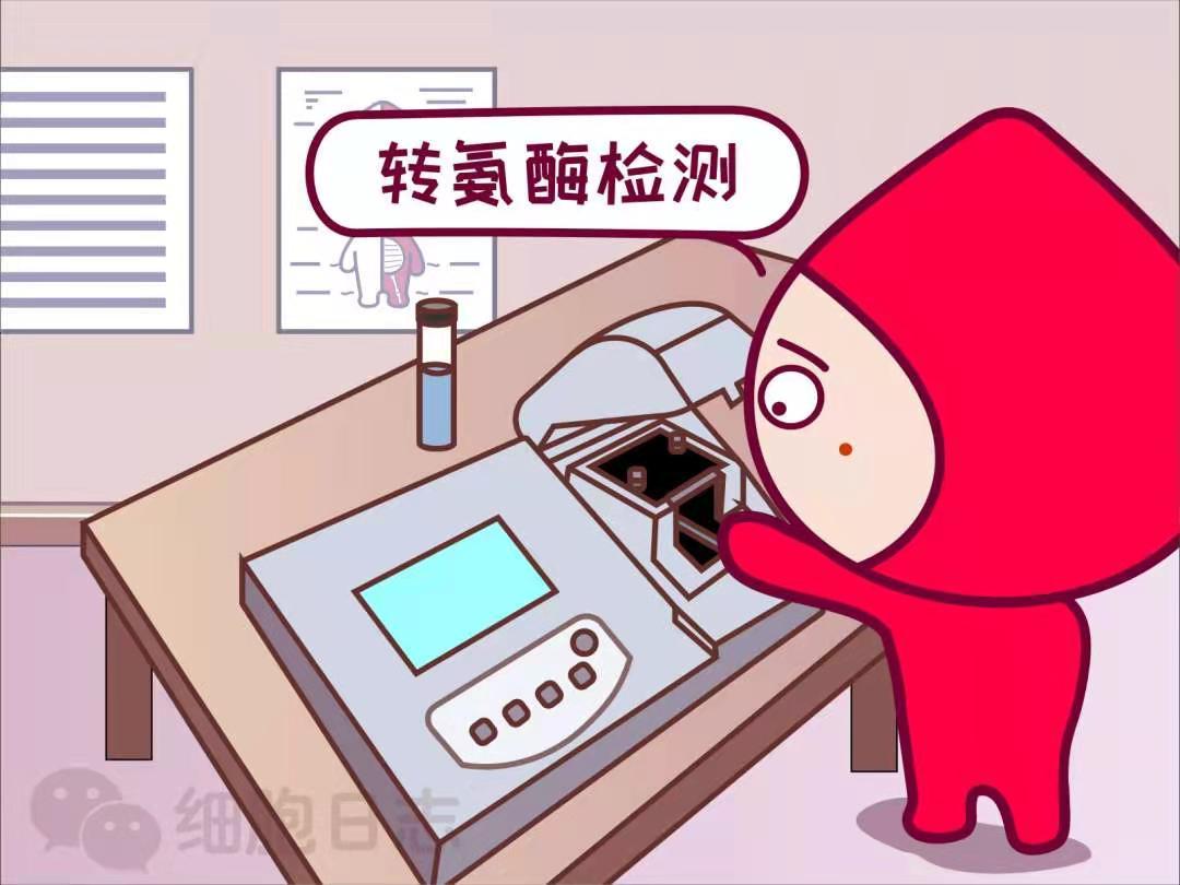 献血检测不合格该咋办?