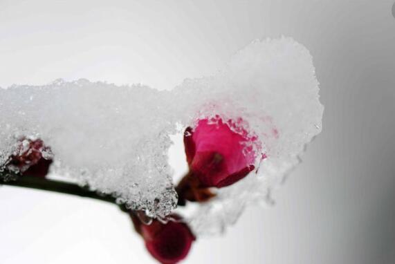 献血知识:冬季献血须知
